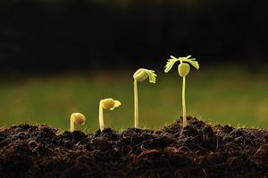 crecimiento - INEAF