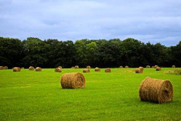 explotación agrícola - INEAF