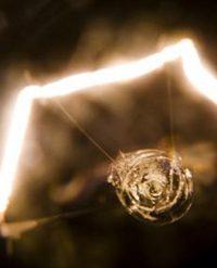 luz - INEAF