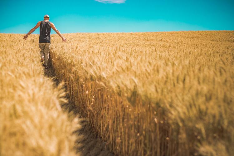 régimen especial agrario